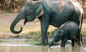 Yala National Park : la vérité j'y étais !