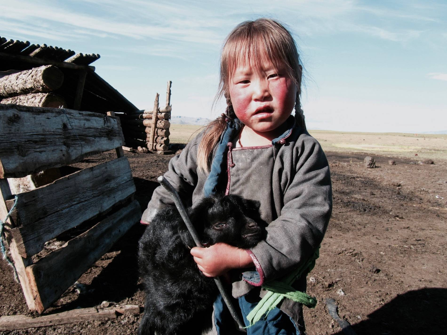 chevre mongolie