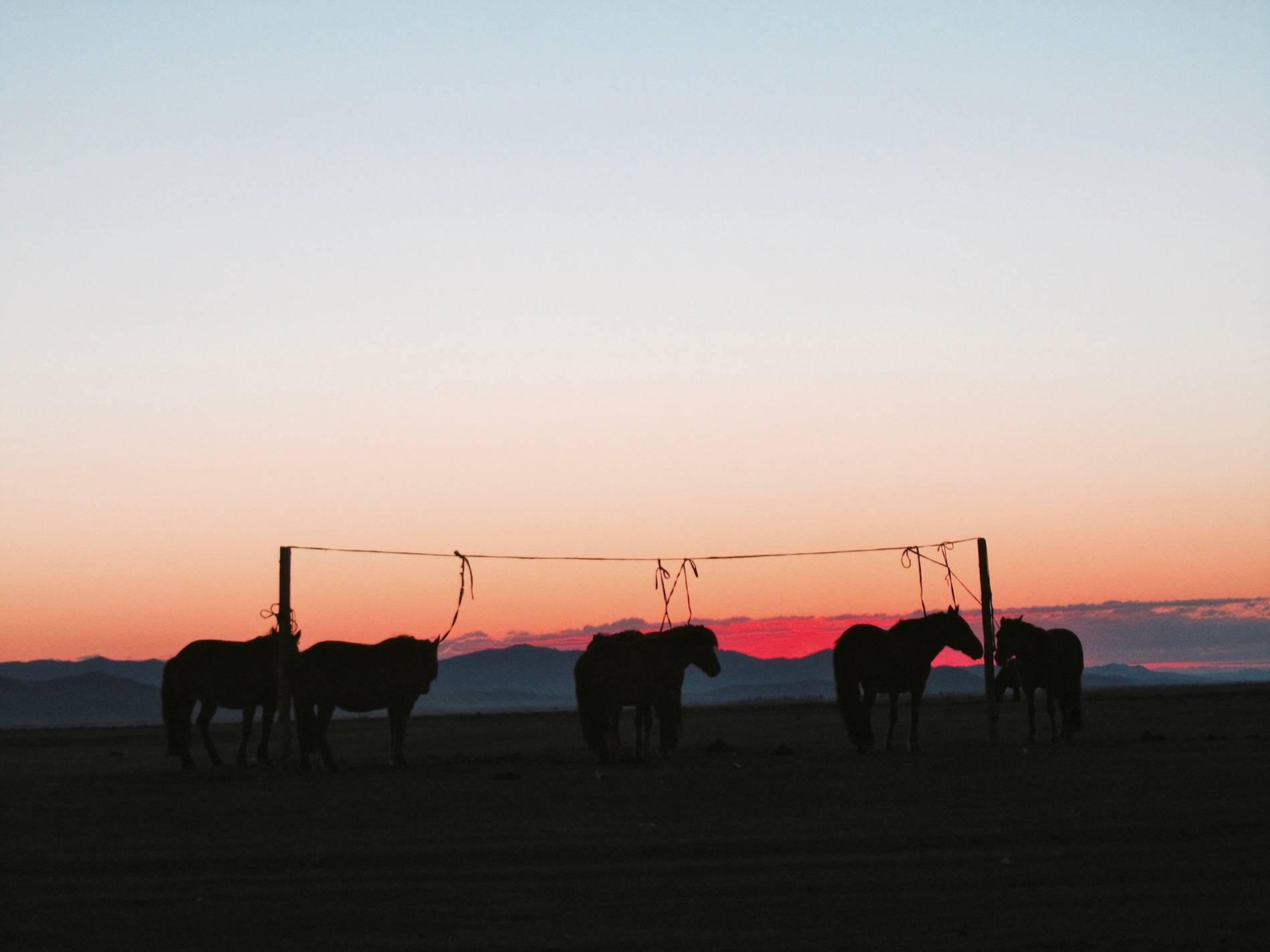 lever du soleil mongolie
