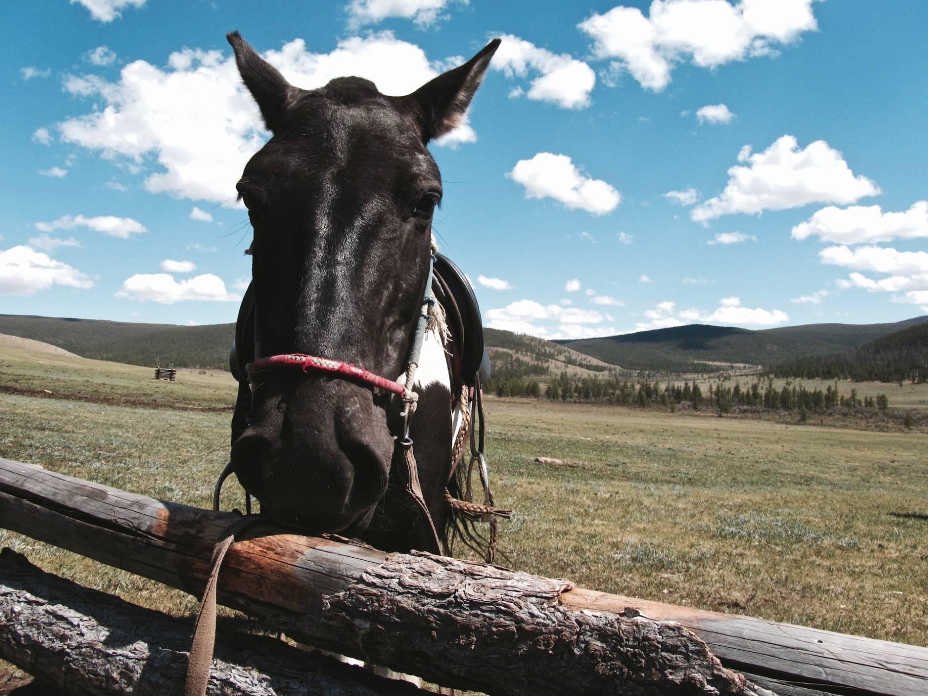 randonnee cheval mongolie