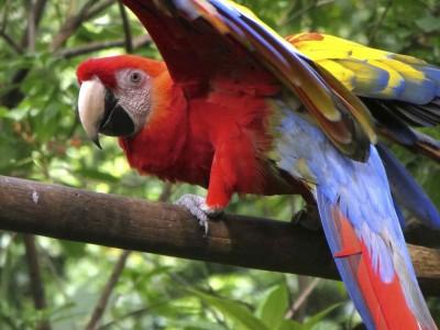 Vidéo voyage Costa Rica