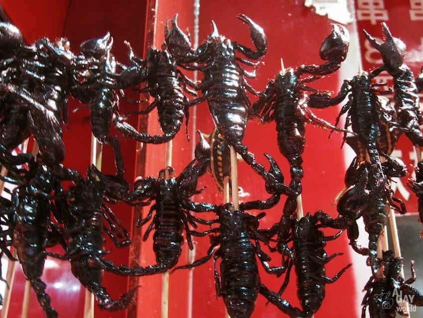brochette de scorpions chine pekin