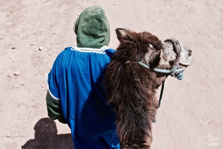 atlas-marrakech-chameaux