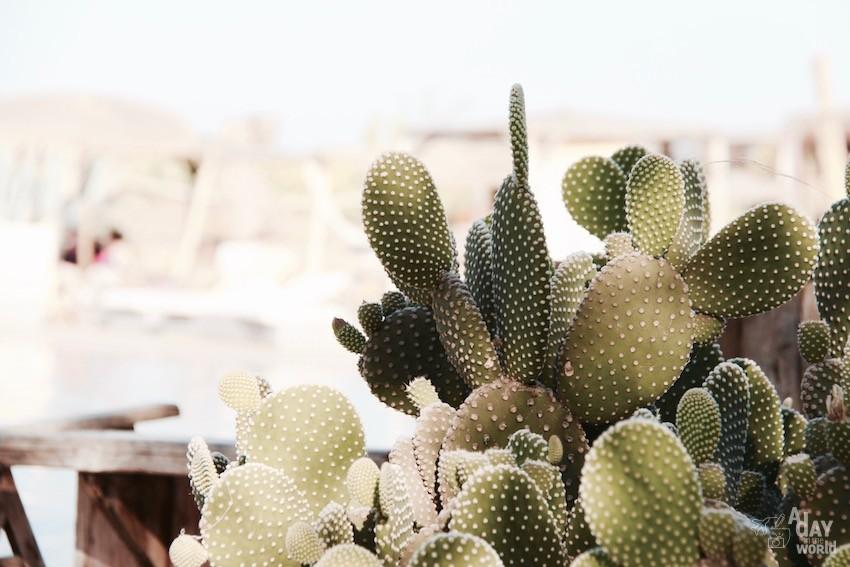 cactus-hotel-fellah-marrakech