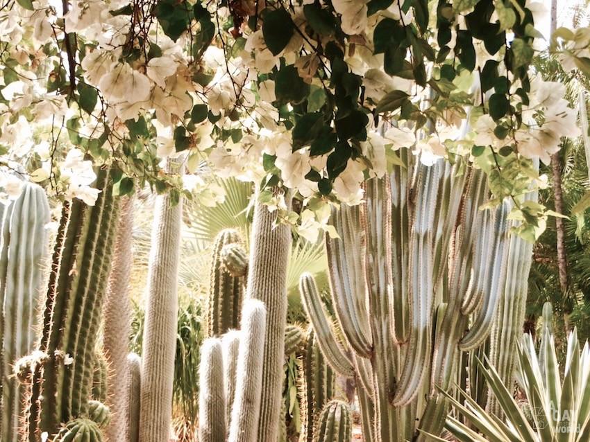 cactus-jardin-majorelle-marrakech-2