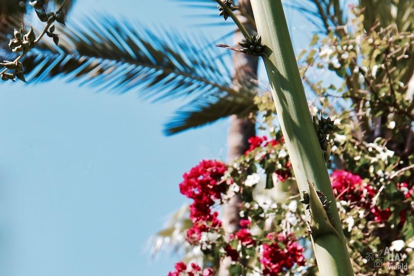 fleur-marrakech-majorelle