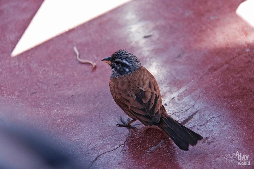 terrasse-des-epices-marrakech-oiseaux