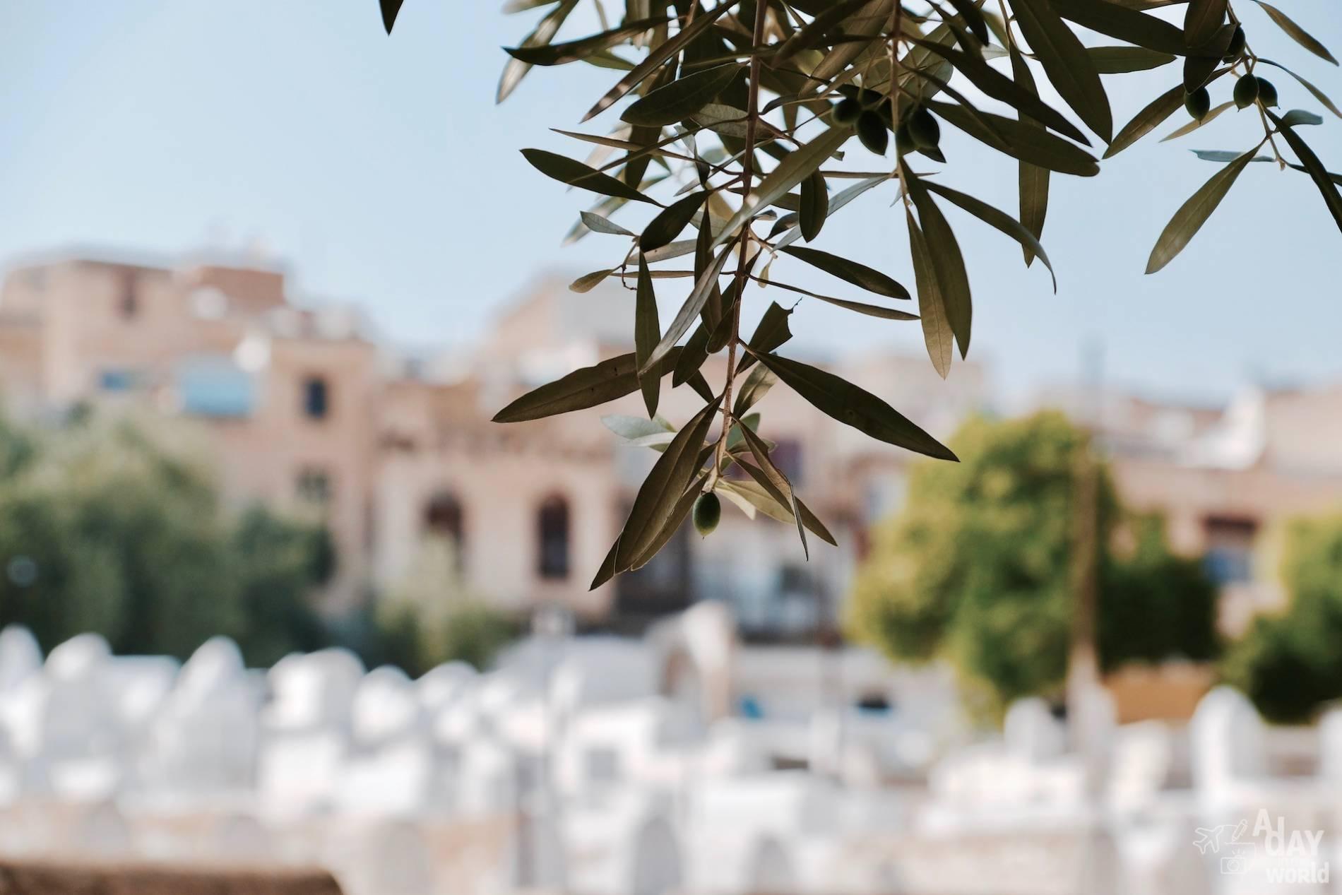 cimetière juif fes