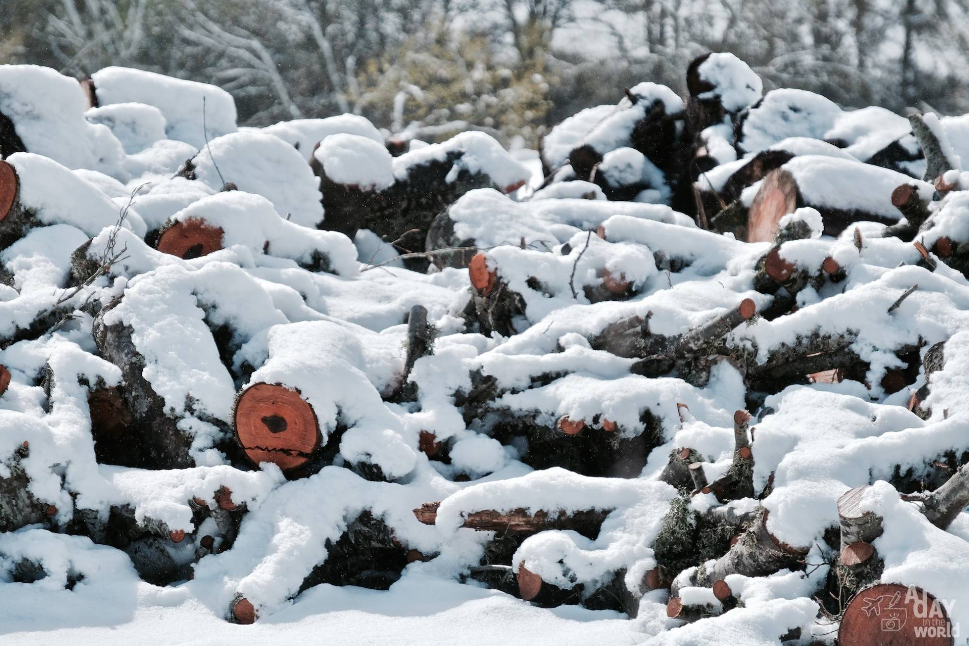 neige lozere 7