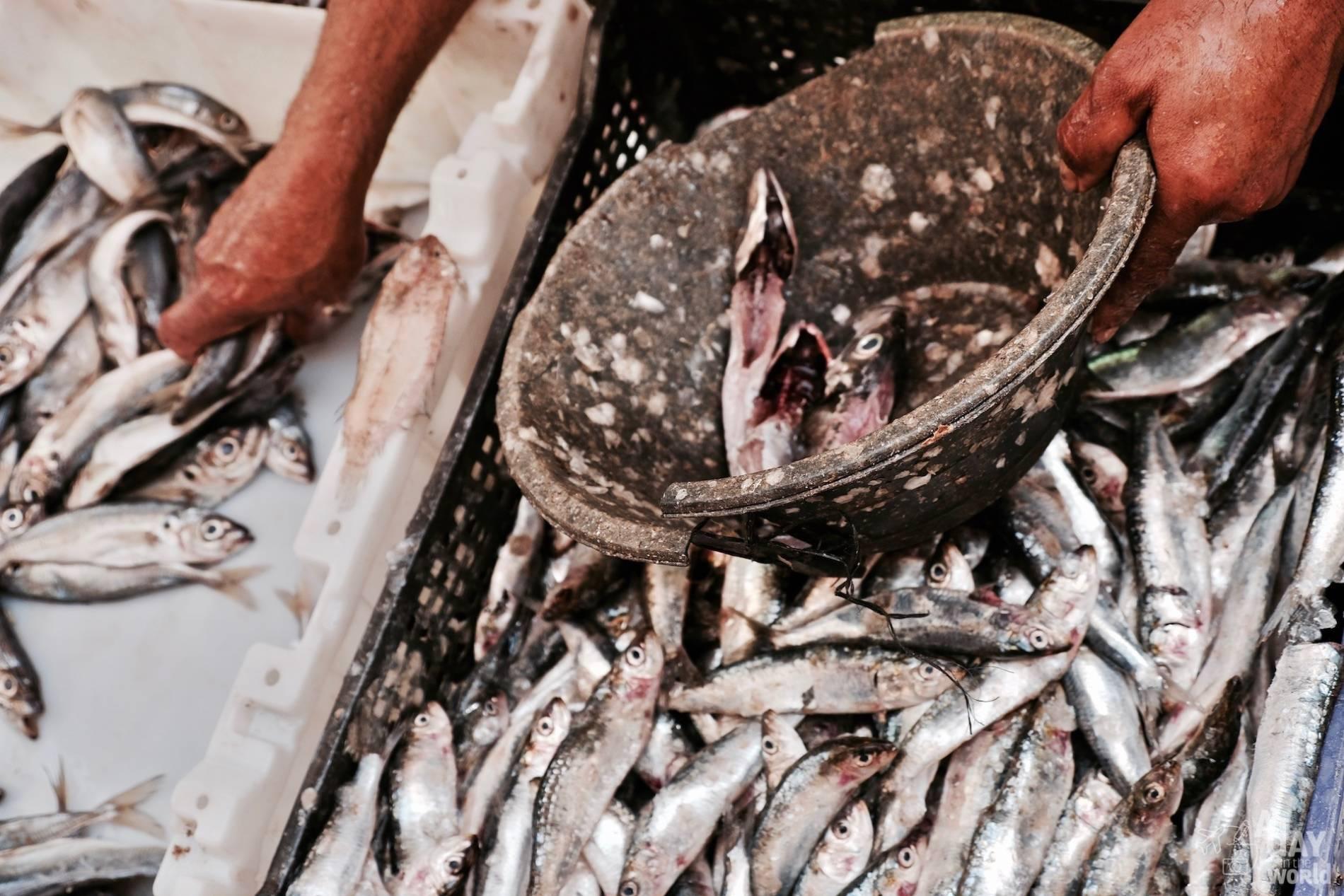 sardine maroc
