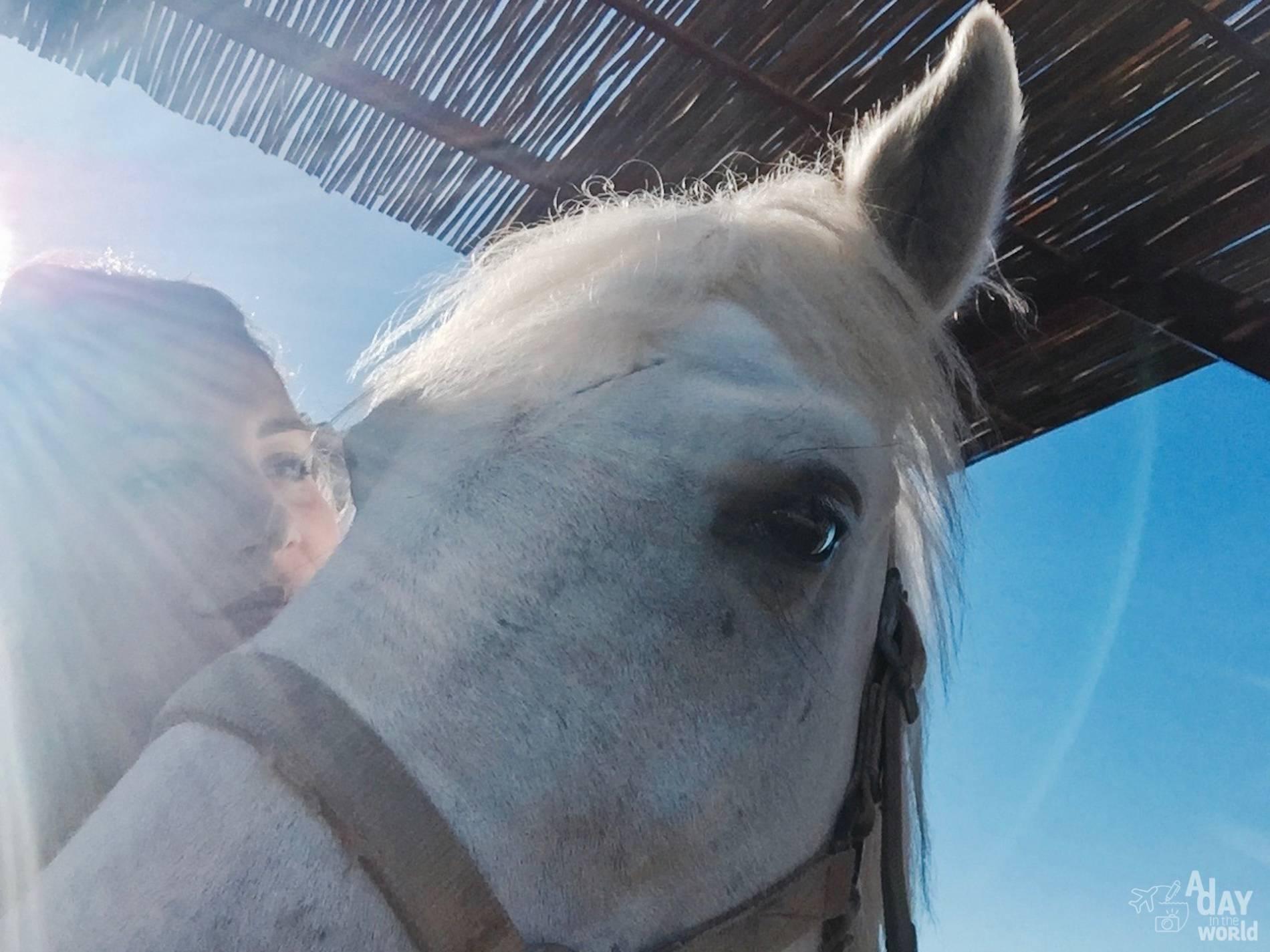 balade cheval camargue 2