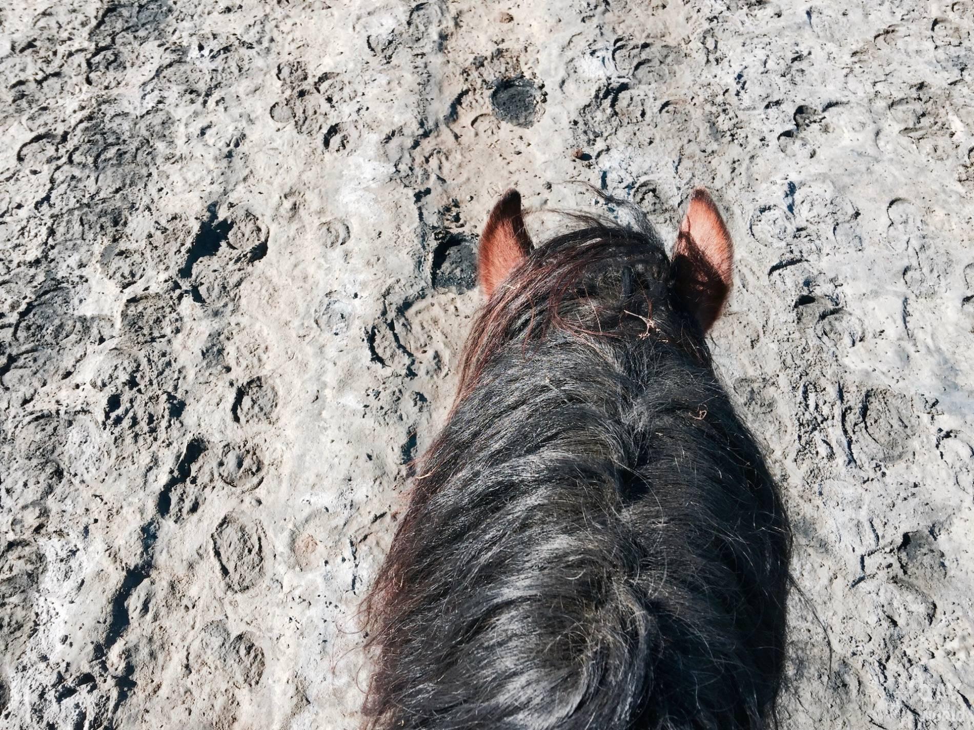 balade cheval camargue 4