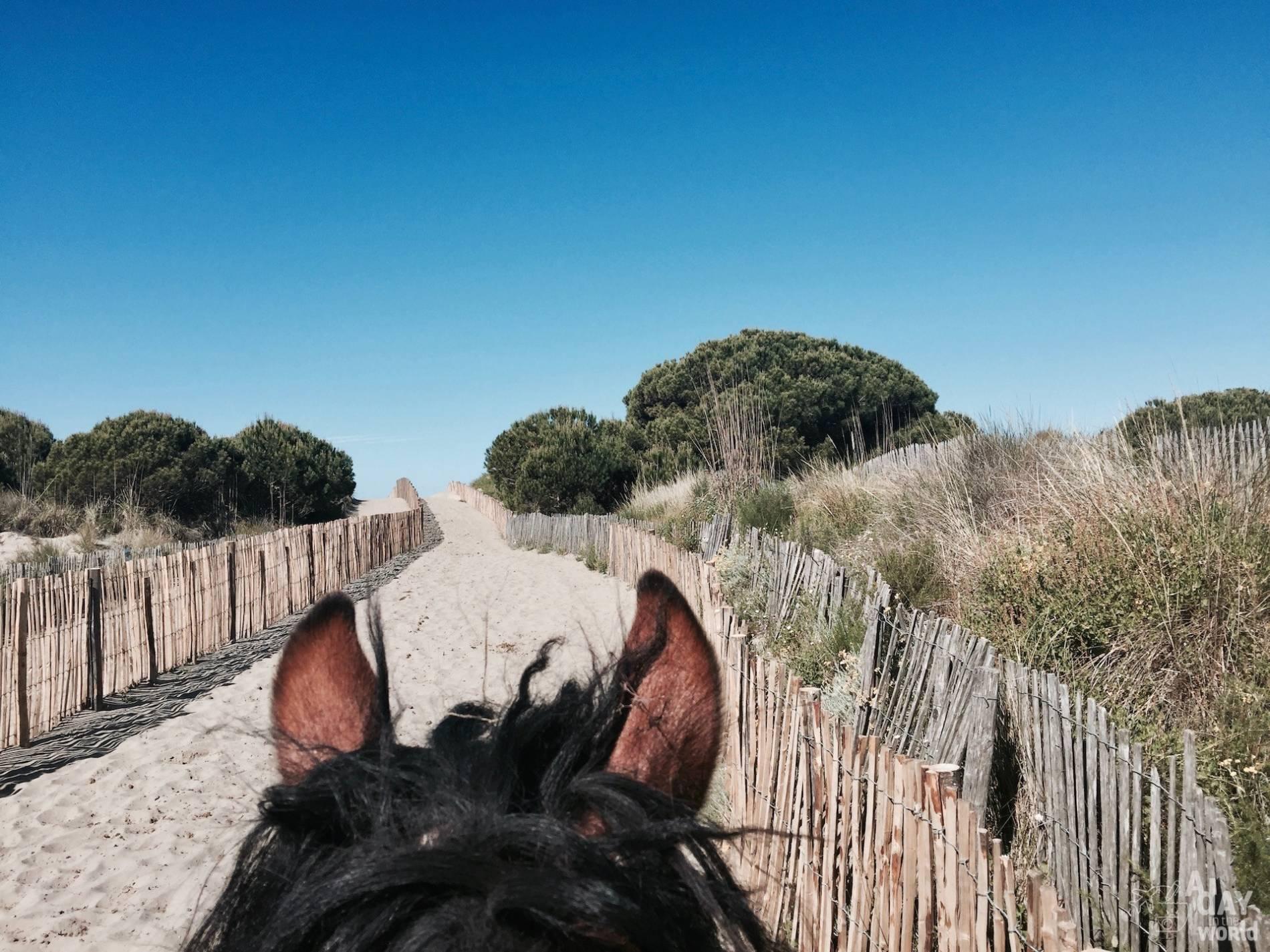 balade cheval camargue 6