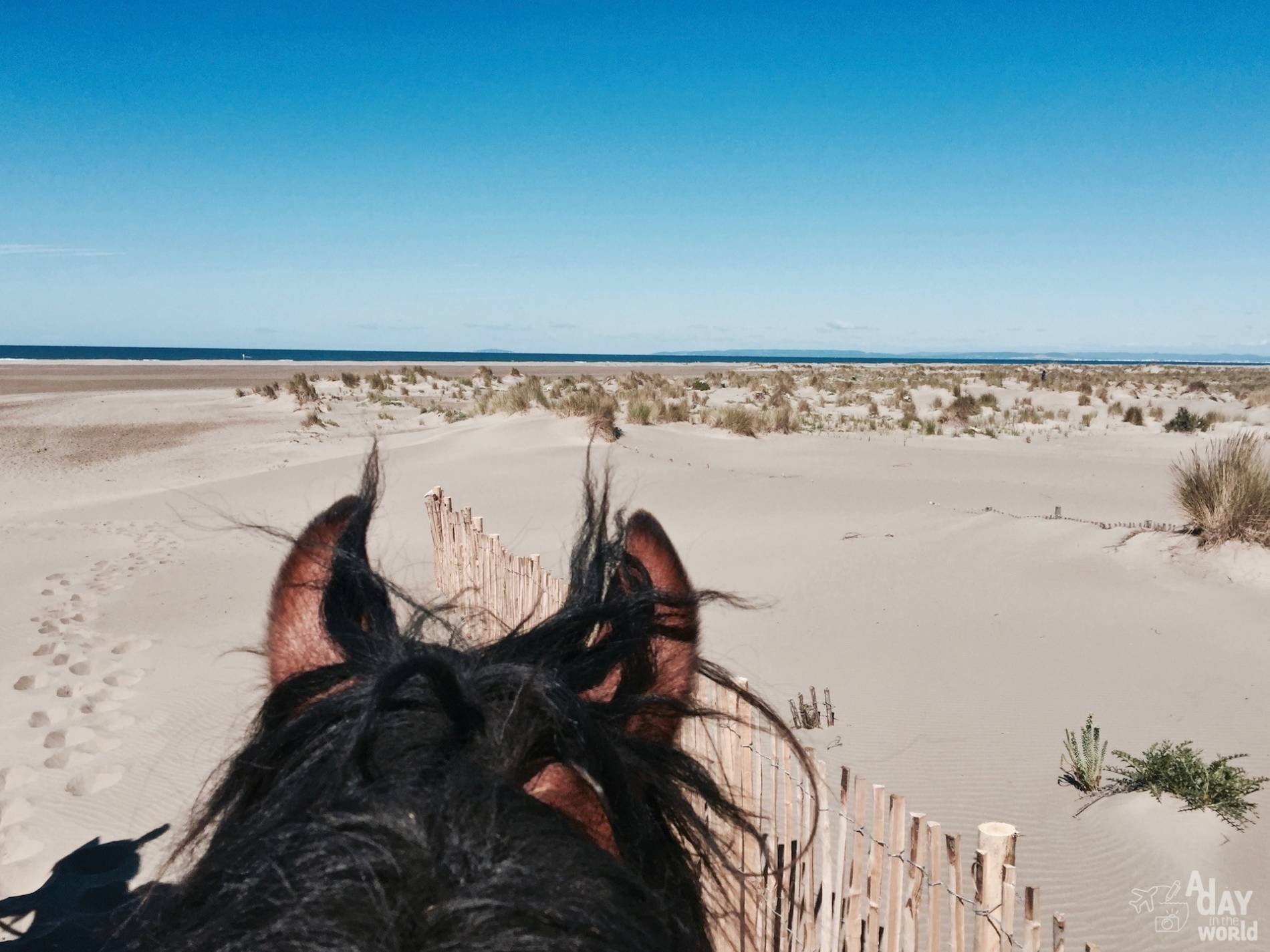 balade cheval camargue 7