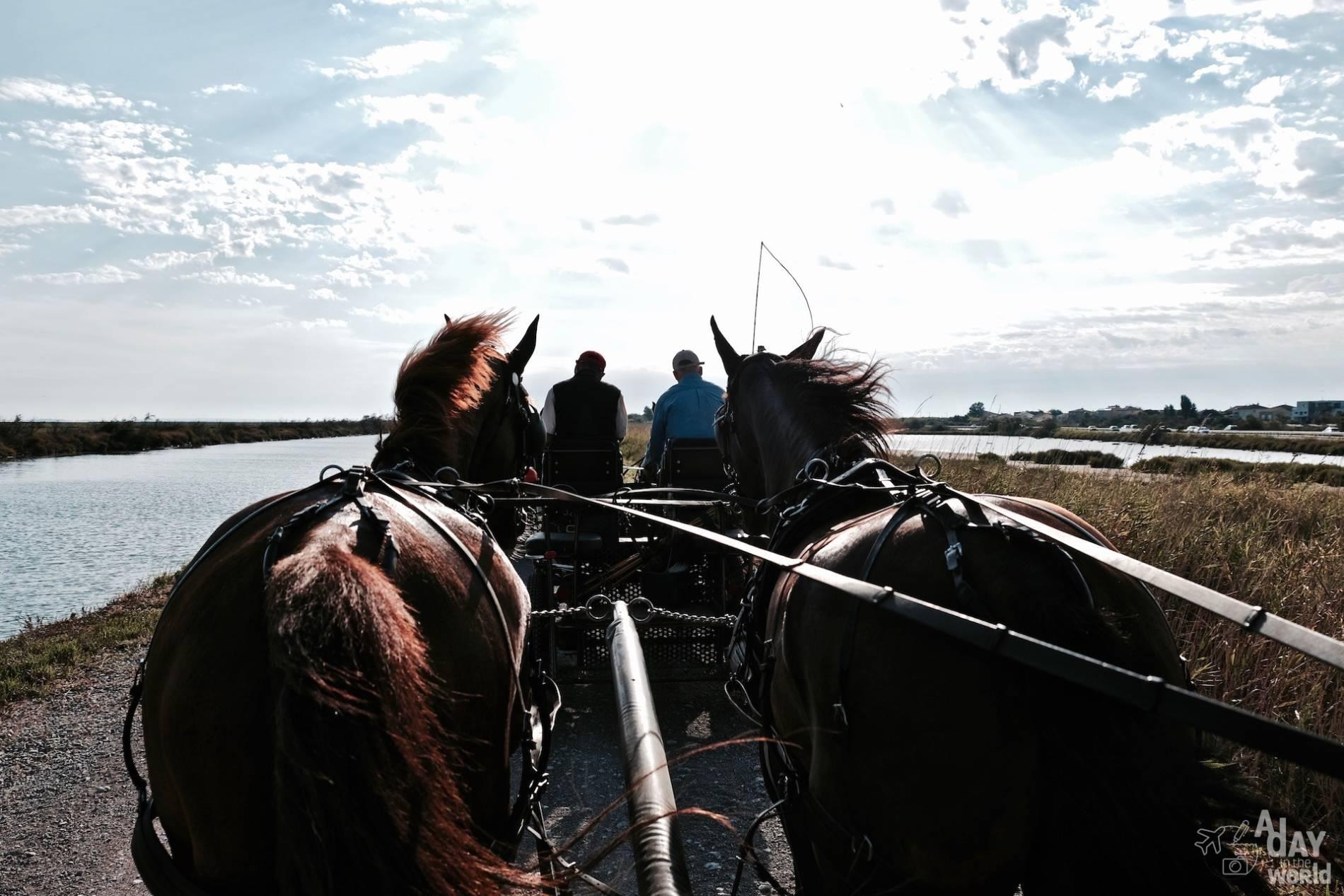 canal de rhone a sete cheval
