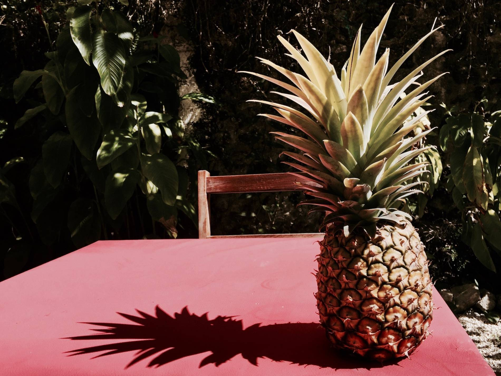 el manati bacalar ananas
