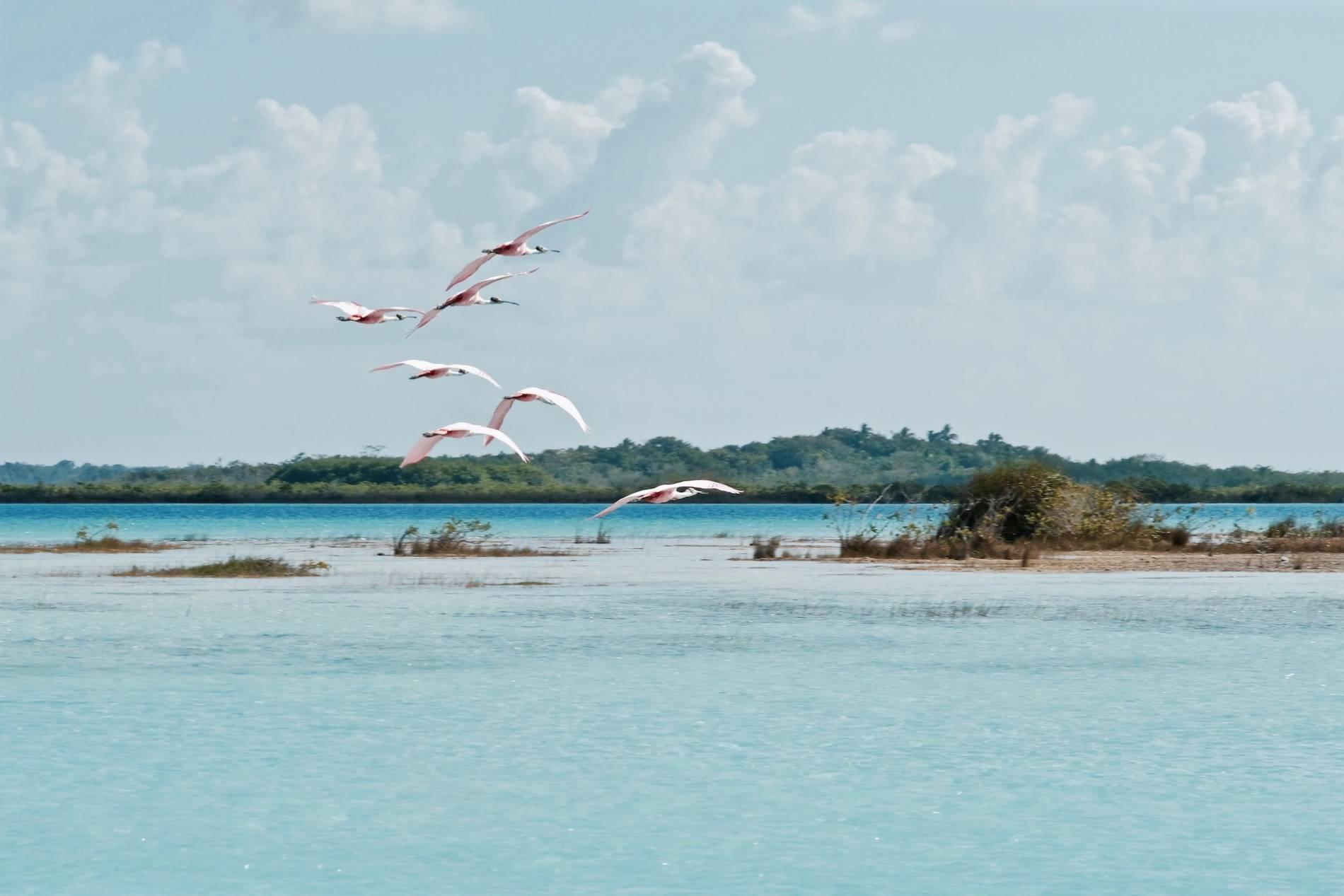 iles aux oiseaux bacalar mexique