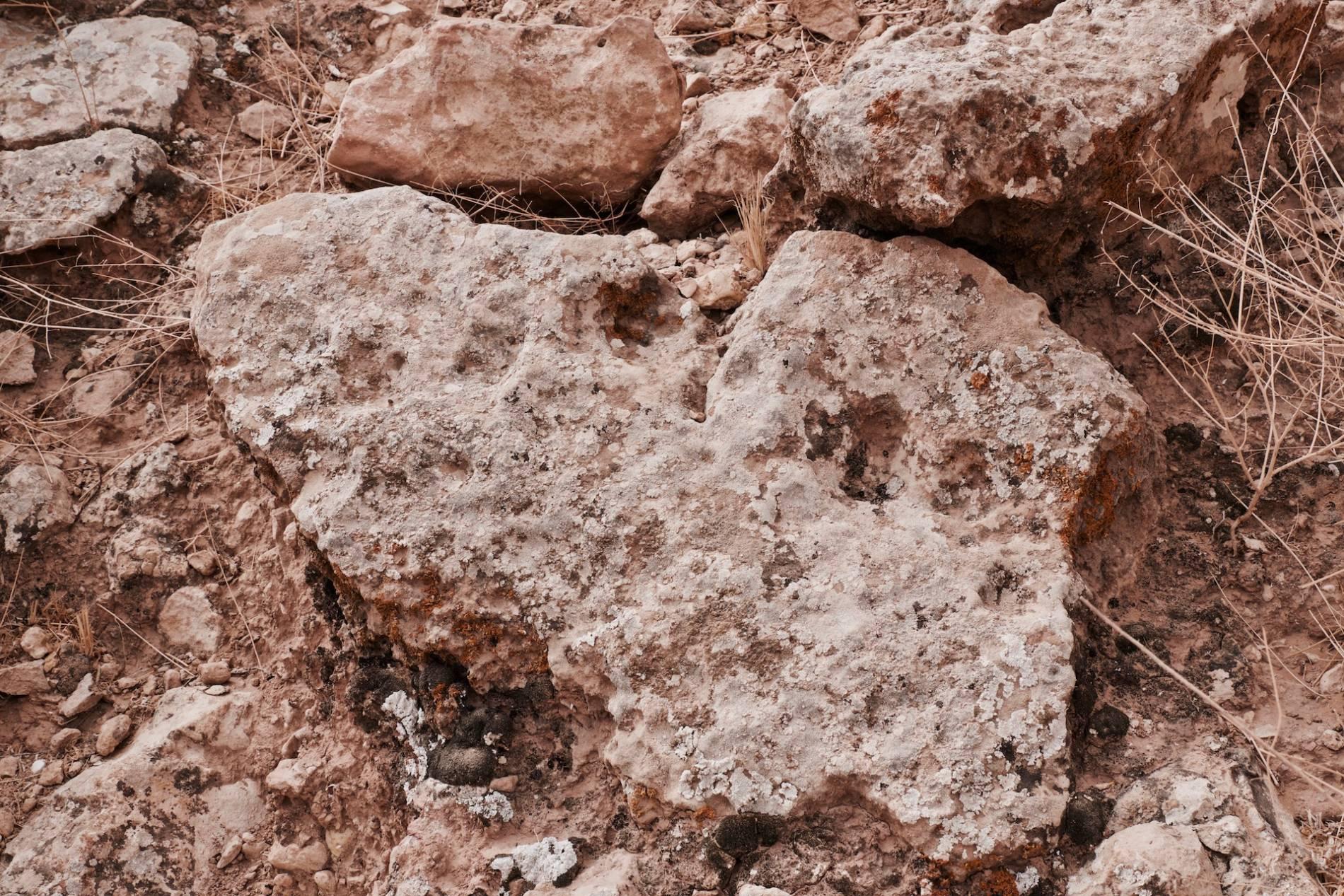 traces de dinosaures tunisie