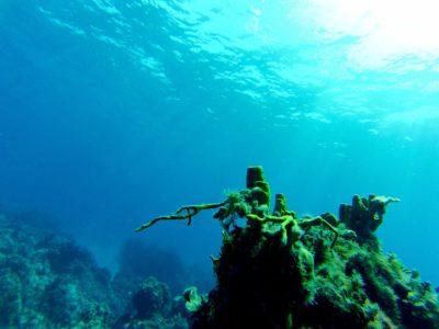 Une plongée à Cozumel au Mexique
