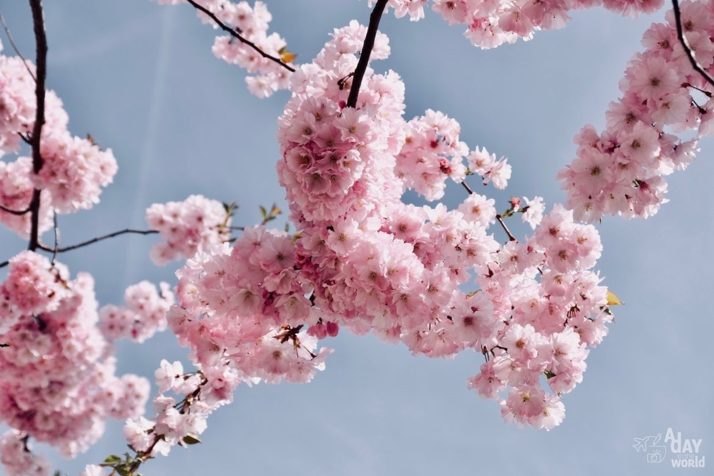 angleterre-fleur