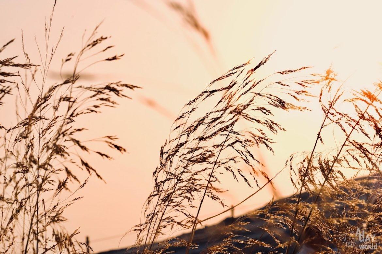 coucher-soleil-aigues-mortes