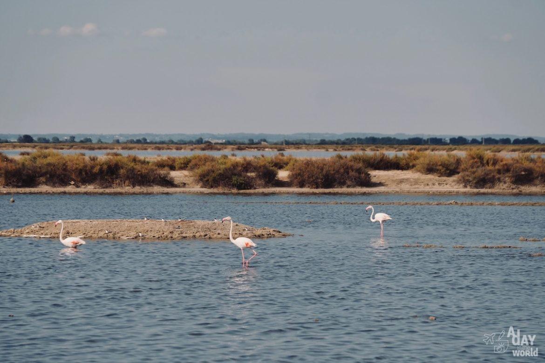 salins-aigues-mortes-reserve-naturelle