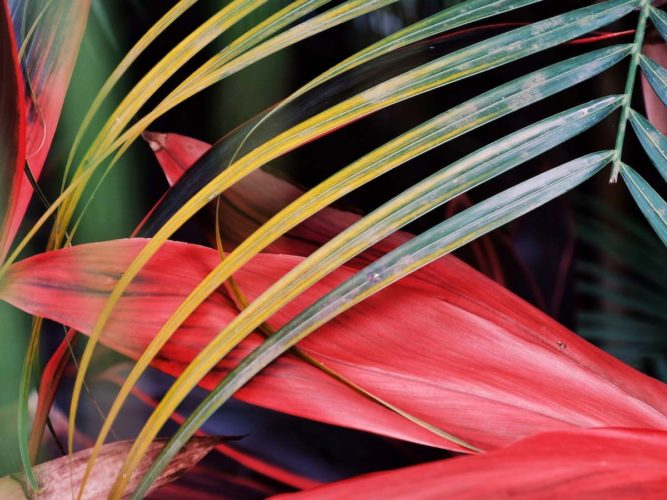 plante-tropicale