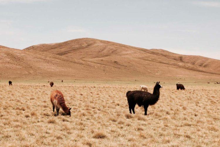 voyage-bolivie-sud-lipez-3