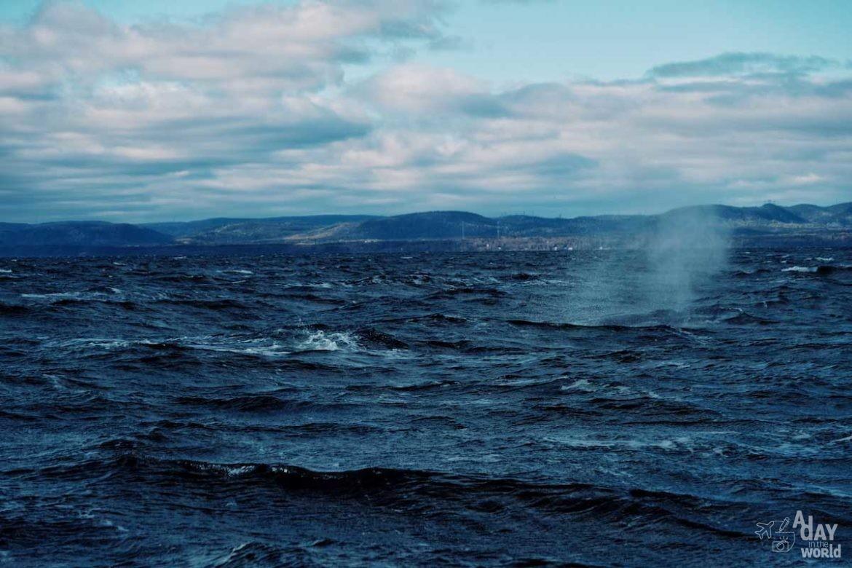 baleine-tadoussac-escoumins-5