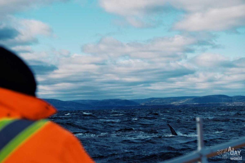 baleine-tadoussac-escoumins-7