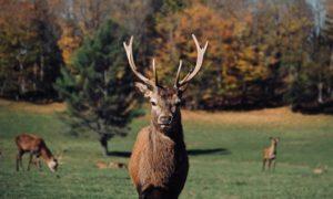 Une journée au Parc Oméga pour découvrir les animaux du Canada