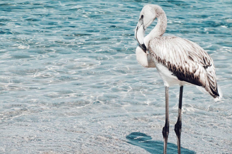 top-10-oiseaux-monde-14
