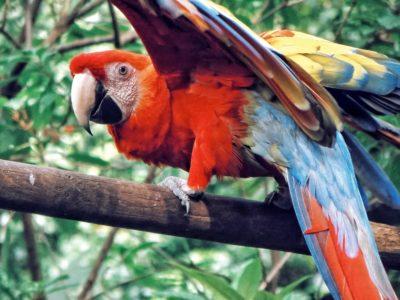 Top 10 des plus beaux oiseaux croisés en voyage